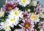 Cara Mengawetkan Bunga Dengan Gampang