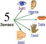 Pengertian Sense Verb dan Contoh (Kursus Bahasa Inggris)