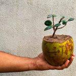 pengolahan limbah sabut kelapa muda
